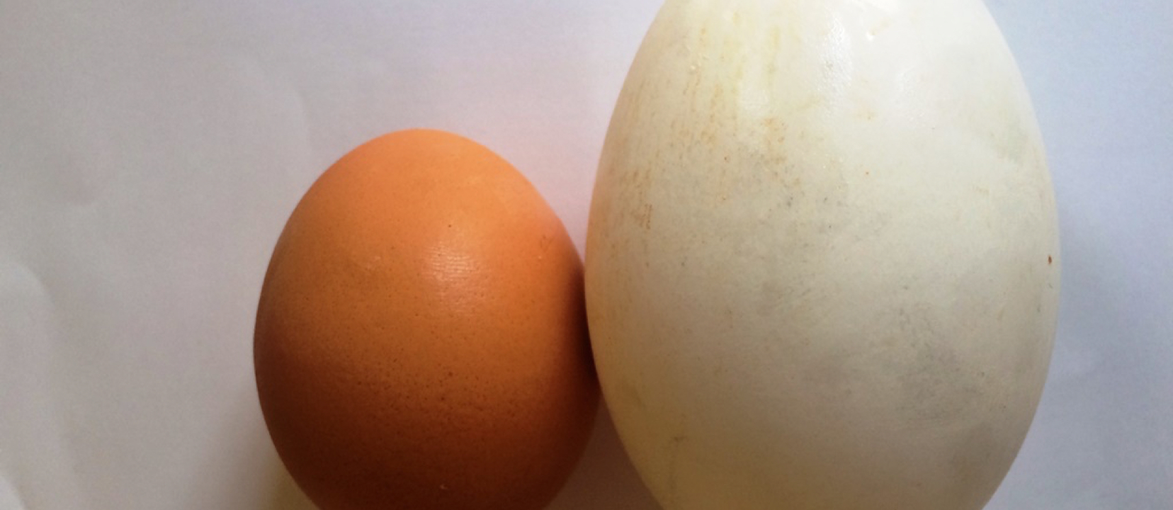 Egg Consumption and LDL Cholesterol Size