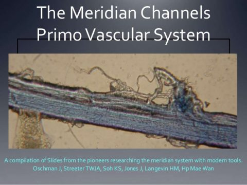 The Primo Vascular System: The N-rays of Acupuncture?